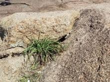 lizard under rock